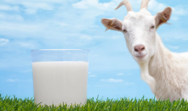 why-goat-milk-is-345322