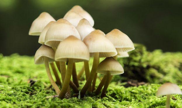 1534761493_rabstol_net_mushroom_06