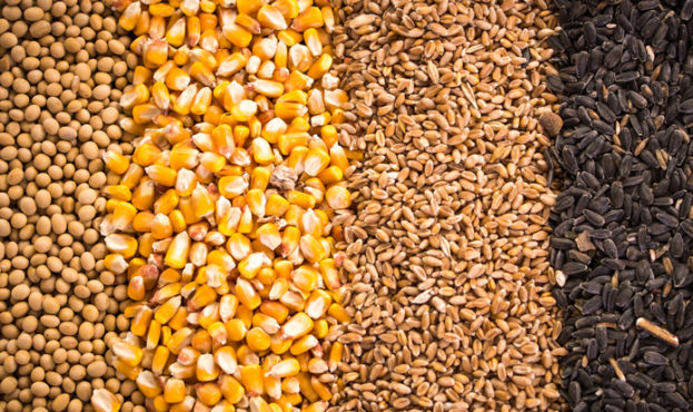 516a787-grains-and-oilseeds