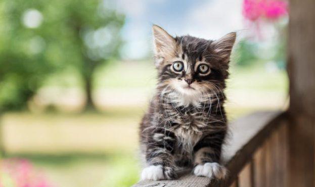 cute-confused-kitten-wallpaper-28431_L