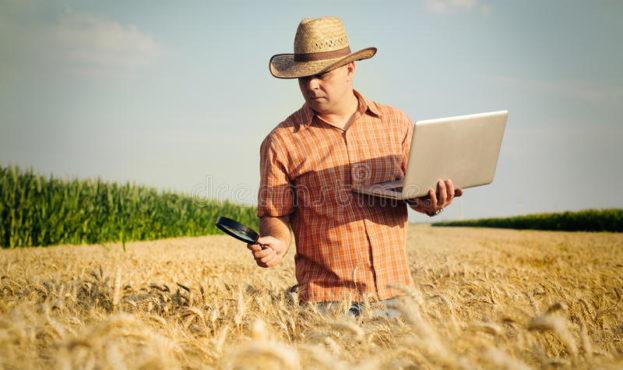 фермер-проверяет-зерно-пшеницы-в-по-е-74279431
