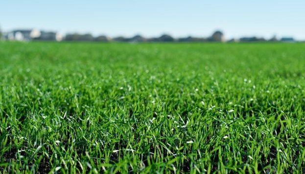 green-fields-in-spring