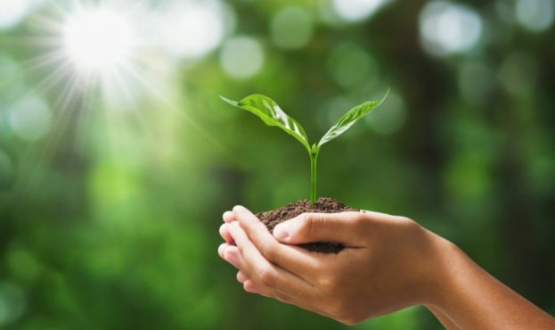 hand-holding-young-plant-on-blur-green-nature-concept-eco-earth-day_34152-1775
