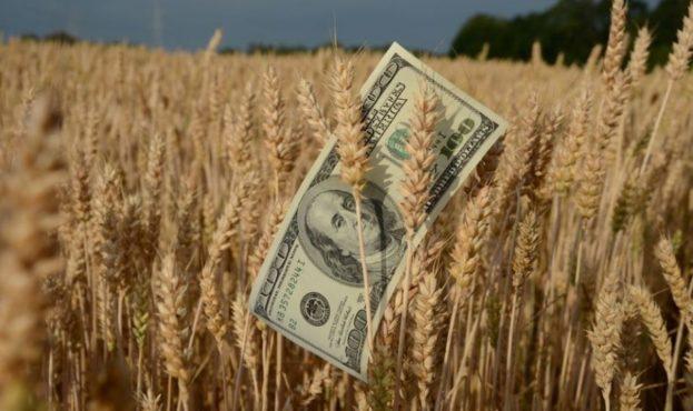 пшениця-1-920x610