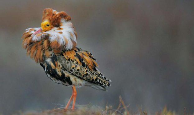 turuhtan-ptica-s-jarkim-vorotnikom-animal-reader.ru-