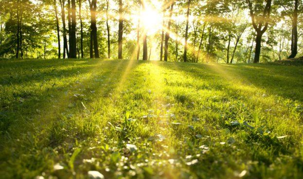vesna-park-les-zelenoe-pole-trava-derevya-solnechnye-luchi-priroda-pejzazh-solnechnyj-svet-zelenyj-pole-1