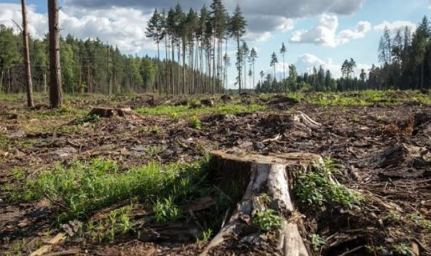 vyrubka-lesov-problema-posledstvija-i-puti-reshenija-8fec31d-1280x720