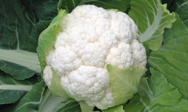cauliflower_skywalker