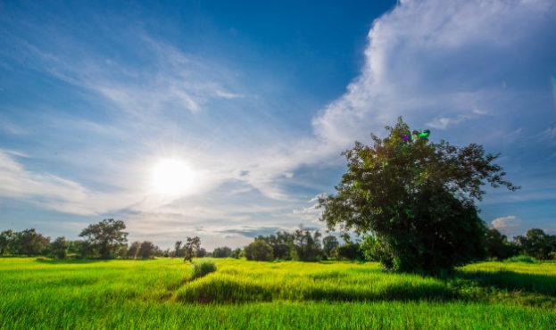 os-campos-de-arroz-sao-verdejantes-para-o-fundo_41516-51