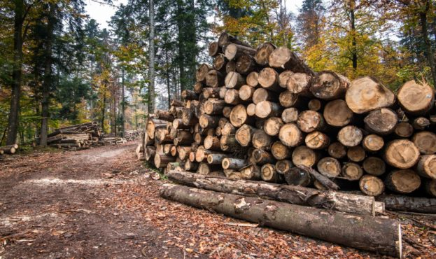 timber-harvesting-a-lot-of-logs-lying-on-the-UWSPLMK-min
