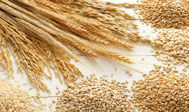 wheat-792x447-788x445