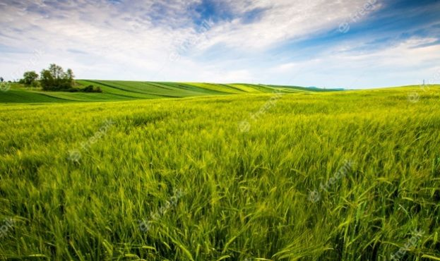 countryside-field-sunny-day-in-the-countryside_181624-24010