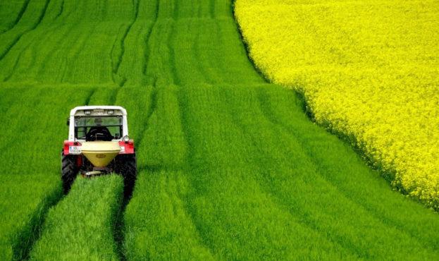 field-of-rapeseeds-4910374-1920_965x0