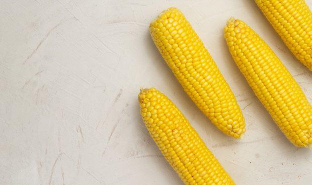 kukuruza-kachan-belyi-fon-minimazizm