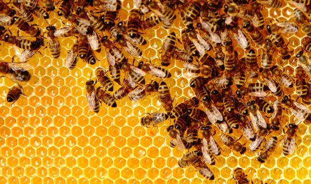 Busy bees producing honey
