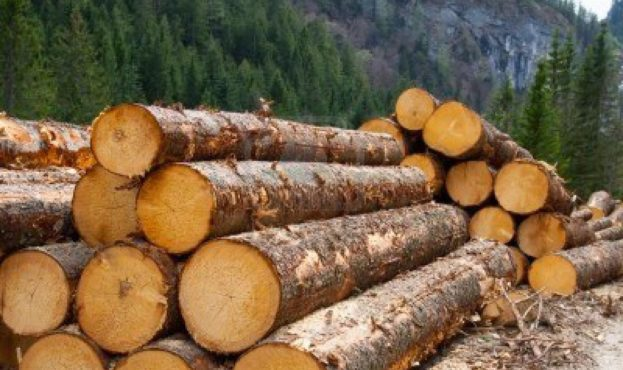 14176713-timber-logging-in-pine-forest-austrian-alps