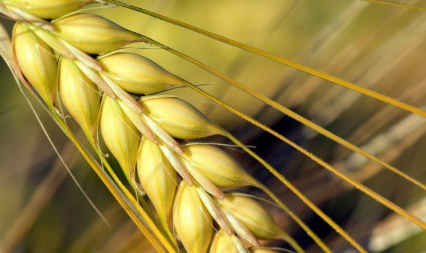 cereals-2436793_1280