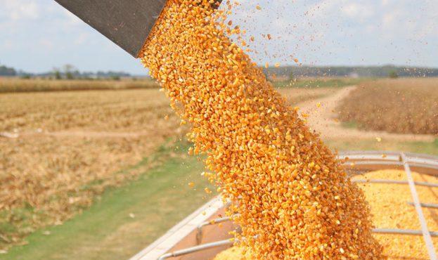 corn-export