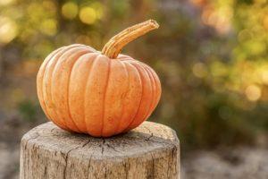 pumpkin-4454745_1920