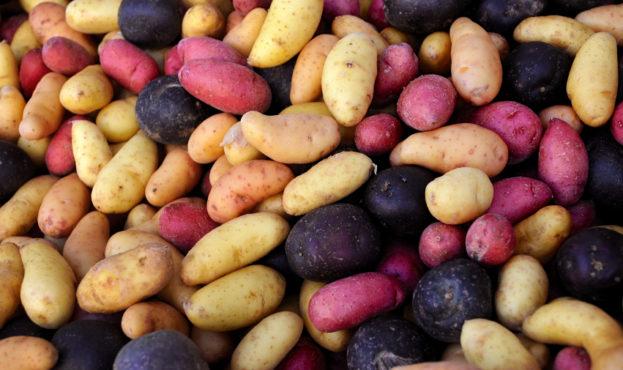 Colored-potato-snacks-Better-antioxidant-activity
