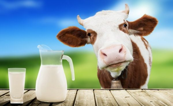 cow-and-milk