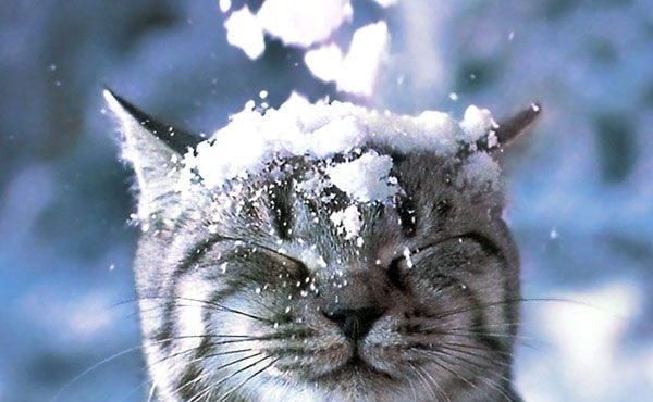 Наступит-настоящая-зима-1 (1)