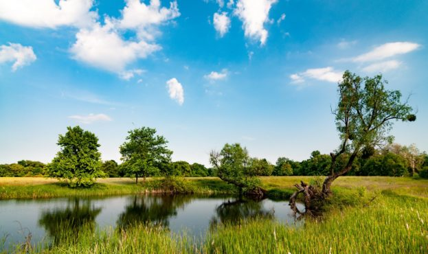 sunny-summer-landscape-with-a-beautiful-forest-AVG24VM-scaled