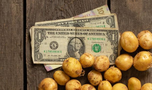 young-red-haired-small-peeled-potato-lies-wooden-table-close-up-there-dollars-next-to-220224552